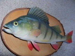 Barsch Fisch Präparat Rute Angeln Spinner Wobbler Blinker Hecht Geschenkop Bild