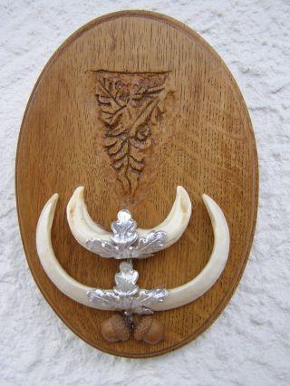 Wildschwein - Zähne Auf Sehr Dekoratives Brett Bild
