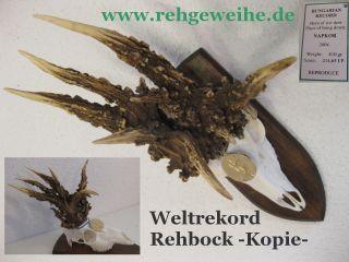 Rekord Rehbock Kapital Rehbock Kopie Nr25.  19 Reh Geweih Geweihe Geschenk Idee Bild