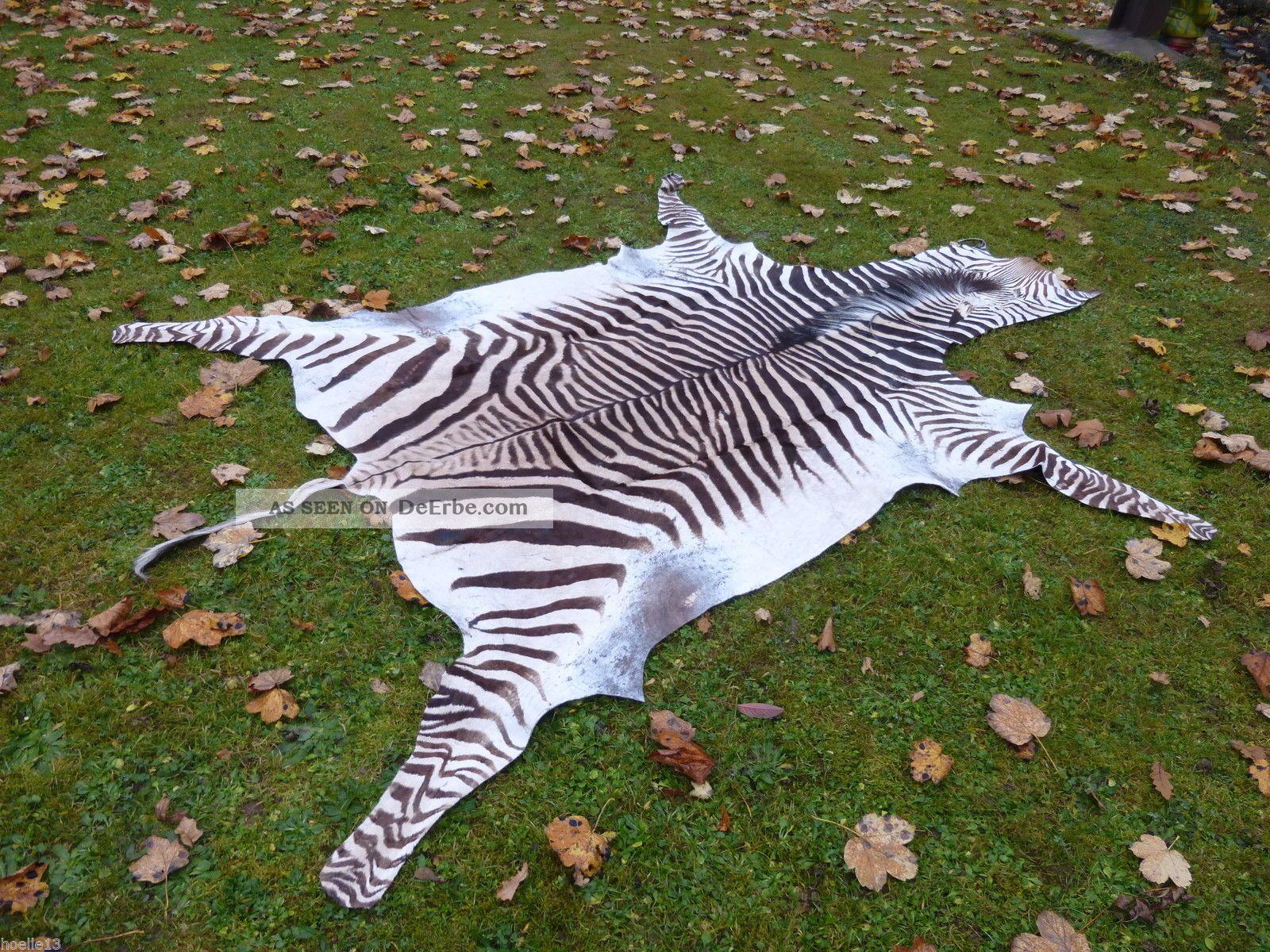 Bergzebrafell mit cites zebrafell dekoration kudu - Dekoration afrika ...