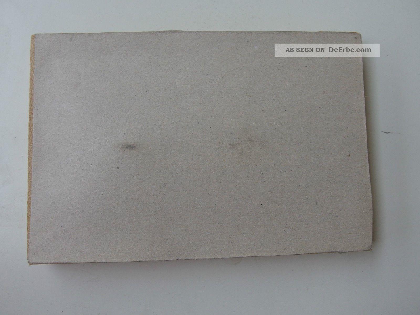 St 42) Präparat Skorpion Im Schaukasten Format Rahmen Ca. 16, 8 X 11 ...