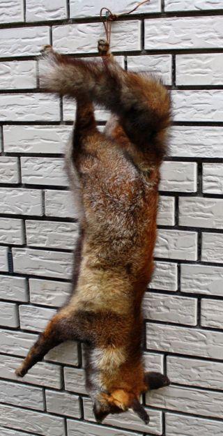 Fuchsstilleben Bild
