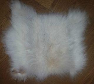 Fuchsfell Weiß Und Fellstück 24 X 30 Cm Bild