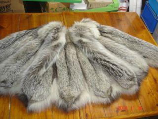 Silberfuchs - Bluefrost - Fox - Cape - Jacke - Mantel - Abendcape Bild