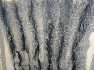 Südamerikanische Graufuchsplatte Bild