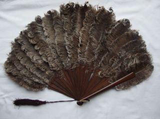 Federfächer Straußenfedern Um 1900 Bild