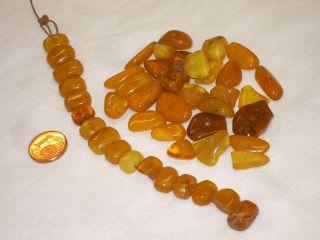 Bernstein Butterscotch Amber Necklace Kinderarmband Stücke Bastelschmuck Kette Bild