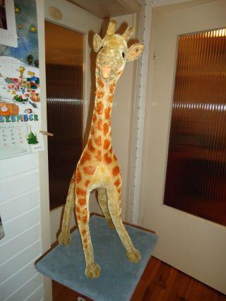 Große Antike Originale Steiff Giraffe Ca.  75 Cm Aus Sammlungsauflösung Bild