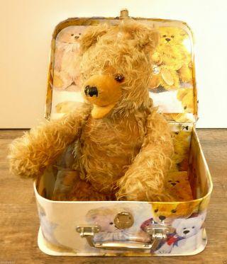 Hermann Zotty,  Teddybär,  Bär,  Dachbodenfund,  Kellerfund,  Sammlerstück,  Top Bild