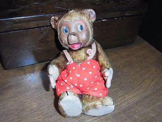 Alter Bär Petz Bild