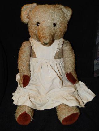 Alte Teddy - Bärin Bild