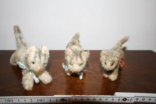 3 Uralte Kleine Kätzchen Bild