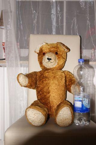 Teddy Teddi Bär Alt Antik Stroh Brummen Groß Braun Bild