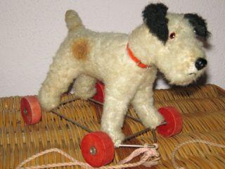 Alter Plüschhund Auf Rädern,  Hund Strohgefüllt Bild