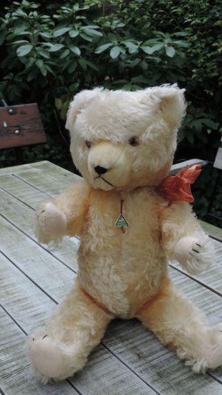 Hermann,  Bär,  Teddy,  Teddybär,  50 Cm,  Antik Bild