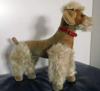 Steiff Hund Pudel Snobby 35cm Grau 5335.  05 Gefertigt Ab 1959 Knopf Und Fahne Bild