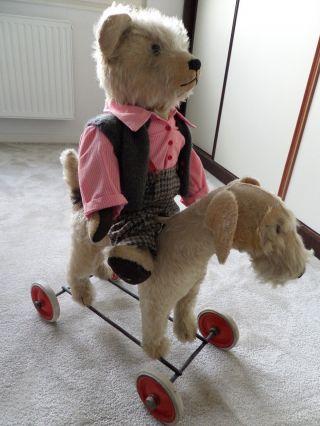 Teddybär Mit Steiffhund Bild