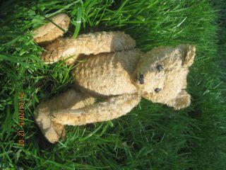Ausdrucksvoller Steiff Teddy,  Ca.  100 Jahre Alt,  Schuhknopfaugen. Bild
