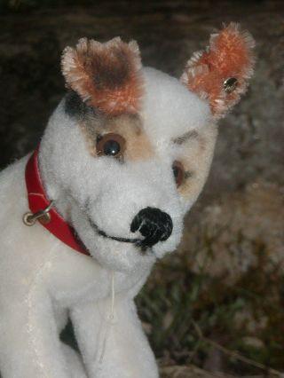 Steiff Hund Elektrola Fox Mit Knopf Selten Werbetier Bild