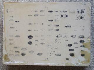 Lithographiestein Litografiestein Lithostein - Käfer Bild