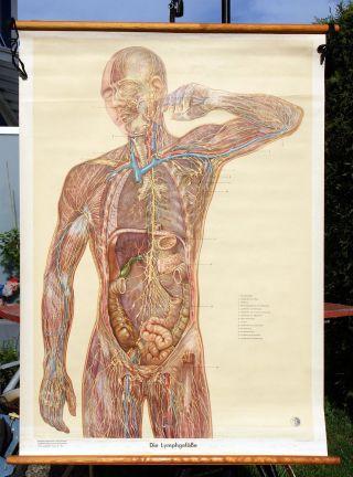 Alte Medizinische Lehrtafel,  Wandkarte,  Anatomiekarte,  Wallchart,  Lymphgefäße Bild