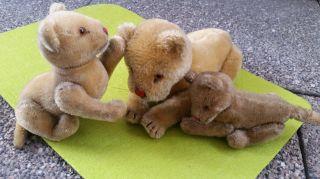 Steiff Löwenfamilie Vorkrieg,  Mohaer,  Guter Zst.  16,  15,  10cm.  Alle Gegliedert. Bild
