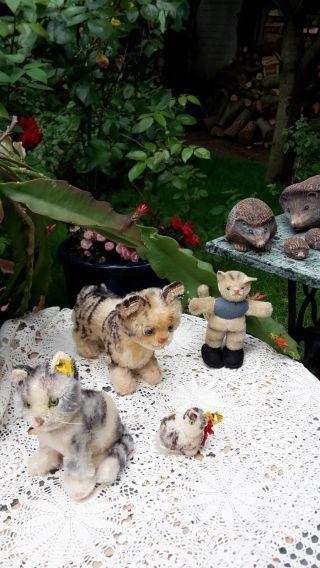 4 Alte Katzen Steiff Bitte Anschauen Bild