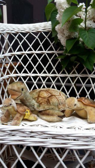 3 Alte Steiff Schildkröten Mit Silber Knopf Und Fahne Bild