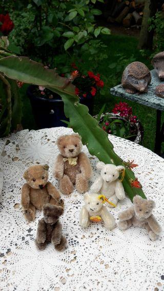 6 Kleine Teddys Bären Auch Steiff Bitte Anschaue Bild