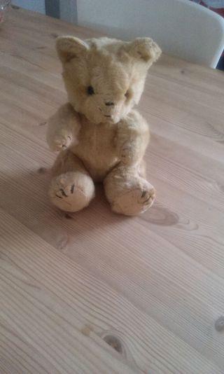 Teddy Alt 50 Jahre Etwa ? Bild