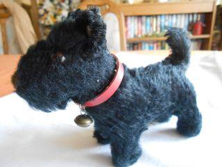 Steiff Scotty Hund Ean 1310,  0 Mohair,  Glocke Und Halsband Sgt.  Erhalten Bild