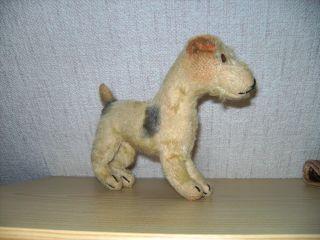 Steiff - Alter Terrier - Foxterrier - Mit Knopf - 60er / 70er Jahre Bild