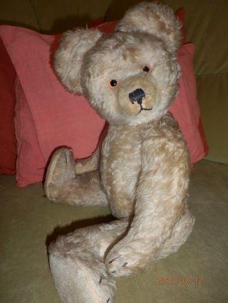 Nachdenklicher Diem Teddy Sucht Neues Zuhause 48 Cm Bär Teddybär Bild
