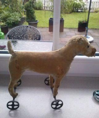 Alter Ca.  1920 Vorkriegs Steiff Irish Terrier Auf Eisen Räder Bild