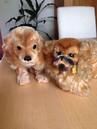 2 Alte Steiff Hunde Pekinese Und Cocker Spaniel Mit Knopf Und Fahne Bild