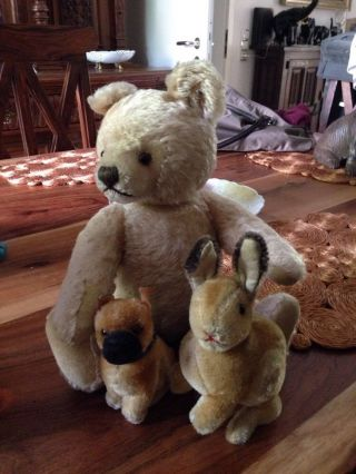 Steiff Teddy Hase Hund Alt Bild