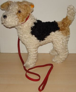 Steiff Hund Terrier Foxterrier Mohair Mit Lederleine 34 X 30 Cm Knopf U.  Fahne Bild