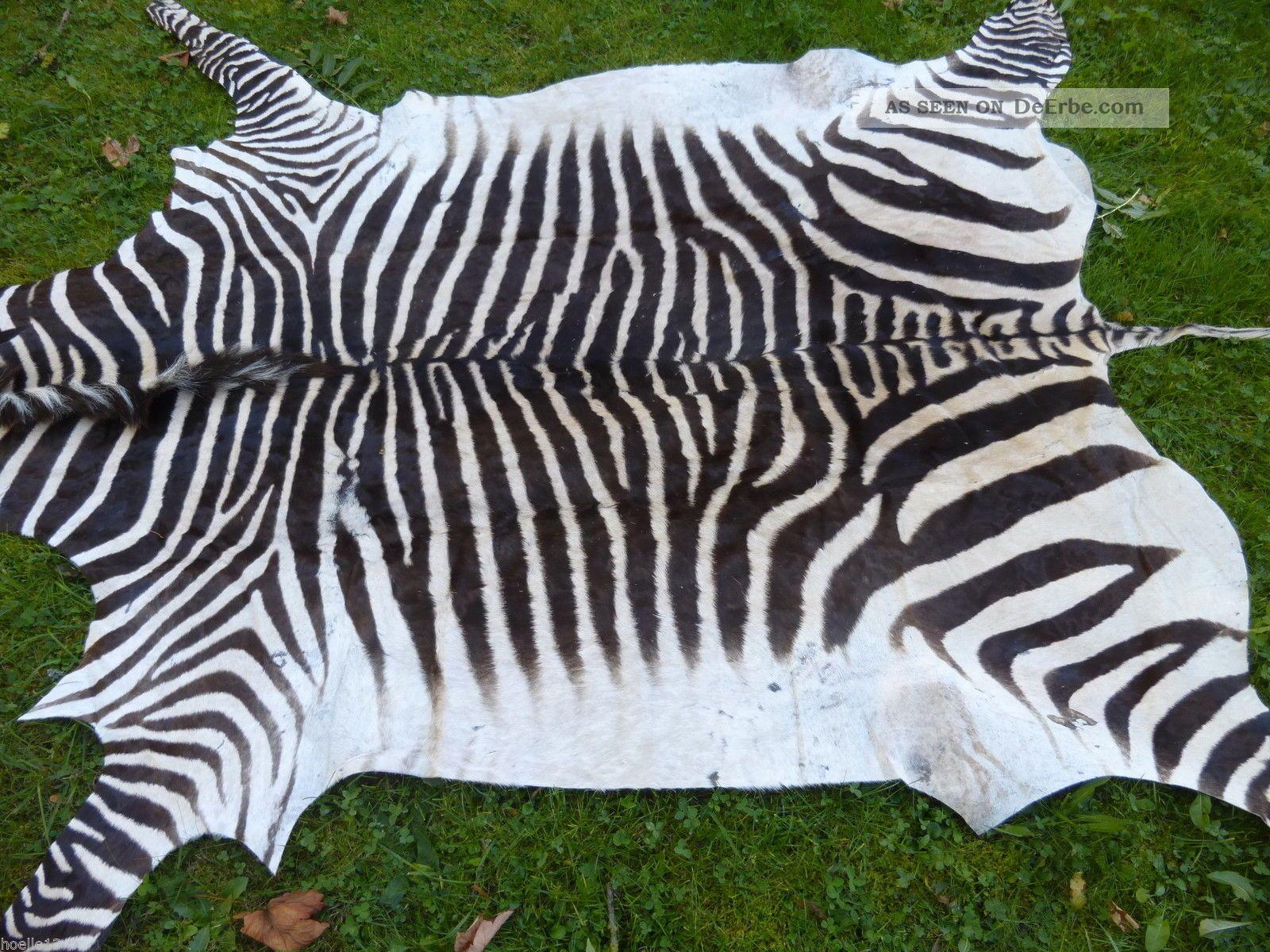 Neues bergzebrafell zebrafell dekoration kudu zebra afrika - Dekoration afrika ...