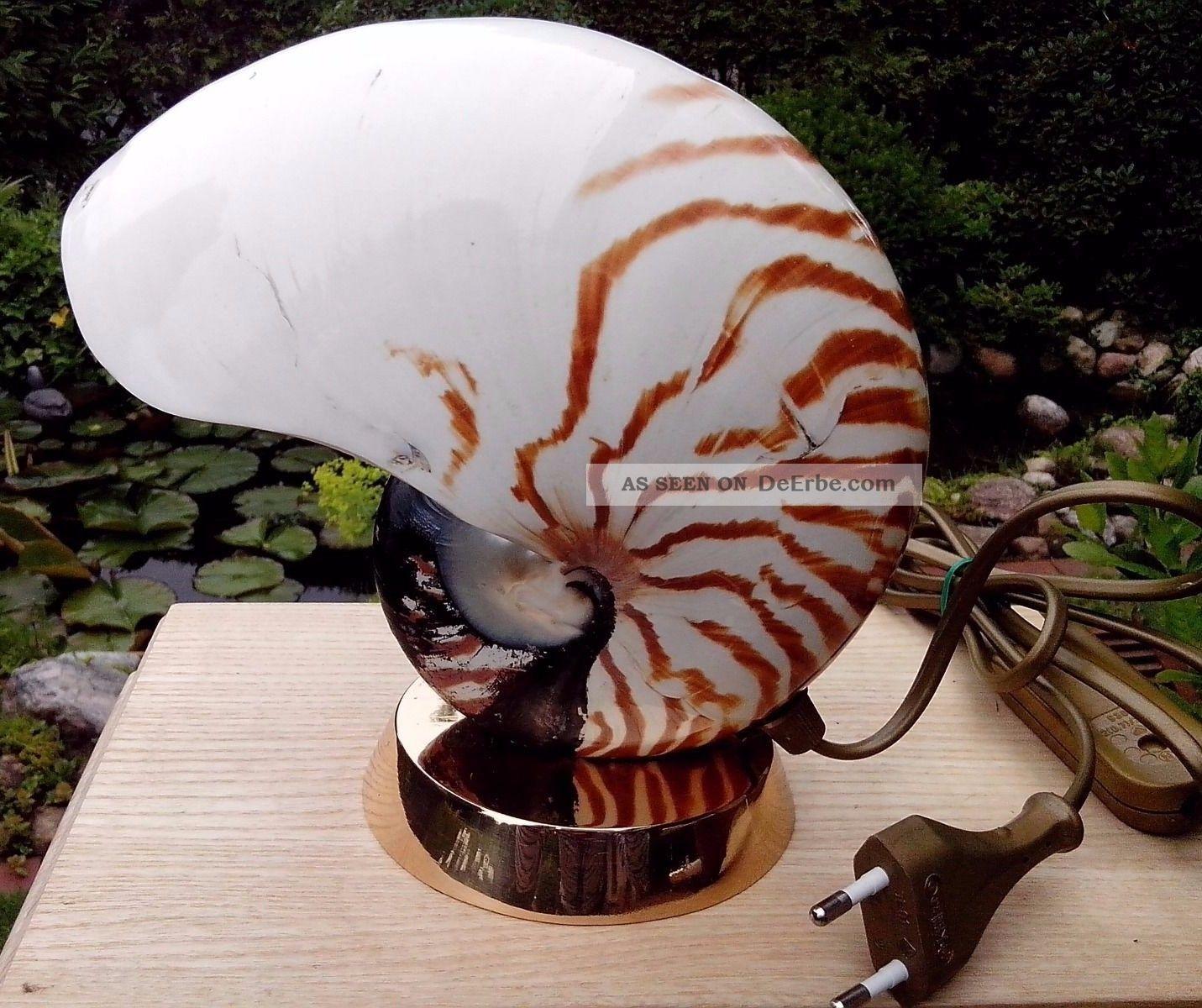 tischlampe muschel nautilus perlboot auf bronzefu selten und edel. Black Bedroom Furniture Sets. Home Design Ideas