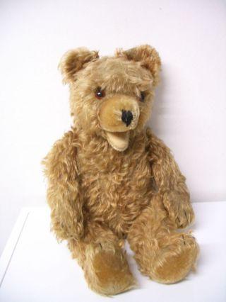 Großer Alter Teddybär Um 1955 - 1960 Bild