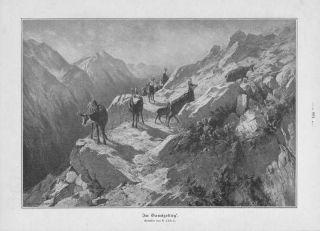 Gemsen Gams Gämsen Im Gebirge Gamswild Holzstich Von 1905 Gamsjagd Bild