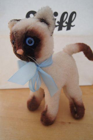 Steiff Siamkatze Katze Mit Knopf Bild