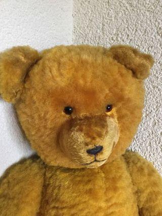 Teddy,  50 Er Jahre,  Sonneberg Bild