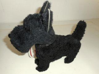 Alter Hund Schnauzer Schwarz Bild