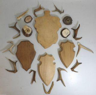 Holzbrettchen Für Rehgeweihe (krickerl) & Zahlreiche Geweihspitzen,  Hornstücke Bild