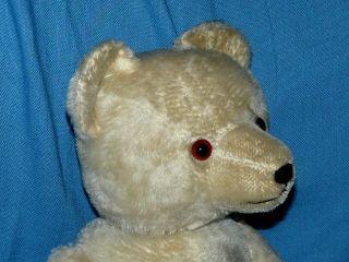 Alte Teddybär Bewegliche Gelenke Könnte Steiff 44 C Sein Aber Ich Bin Mir Nicht Bild