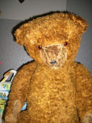 Charakterstarkes,  Liebes,  Altes Bärenmädchen - Teddybär - Stolze 70cm Groß Bild