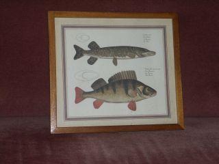 Fische Hecht Und Barsch Als Druck - Im Holzrahmem - Dachbodenfund Bild