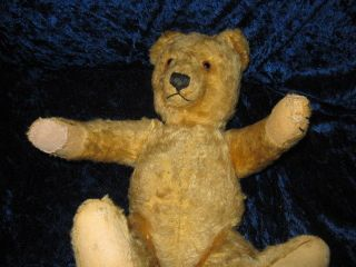 Alter Steiff Teddy Von 1950 - 1960 Jahren - 35cm - Gold - Blond Bild