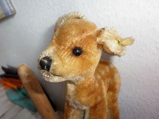 Steiff Rehkitz Reh Bambi Plüschtier Mohair 60erjahre Kf Bild
